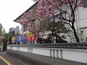 千葉神社DSC01654
