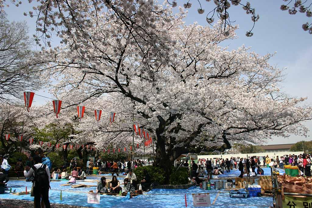 上野公園03