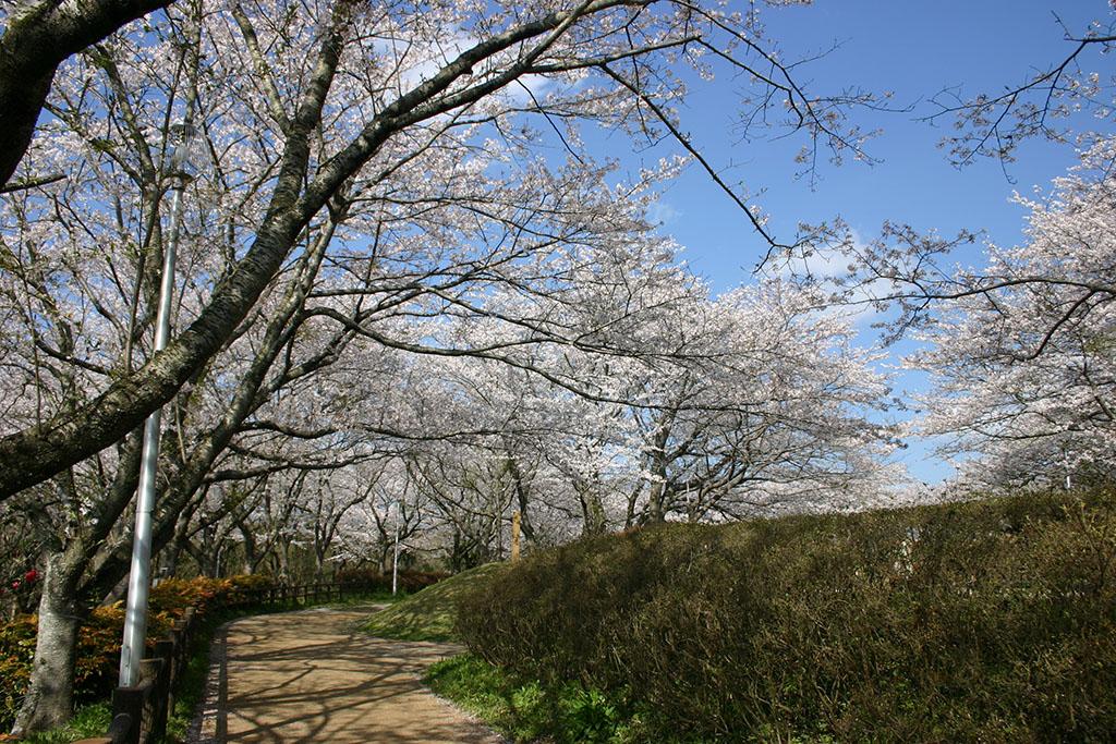 印旛沼公園02