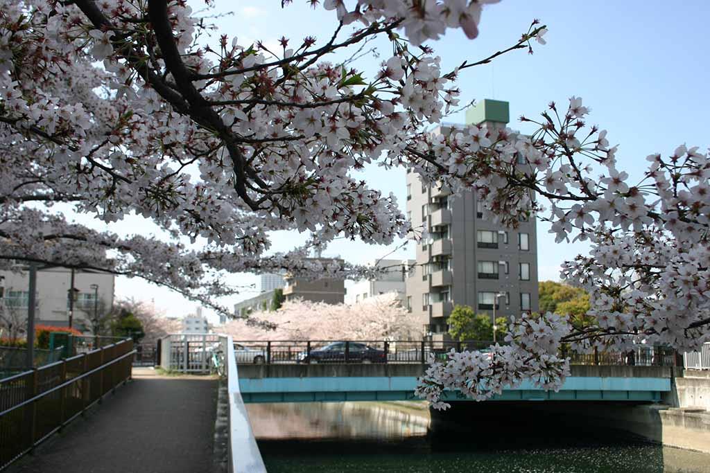 海辺橋付近の仙台堀川01