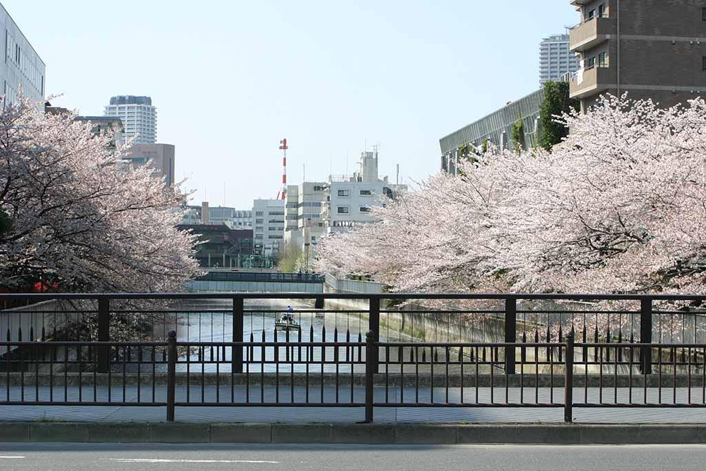 海辺橋付近の仙台堀川03